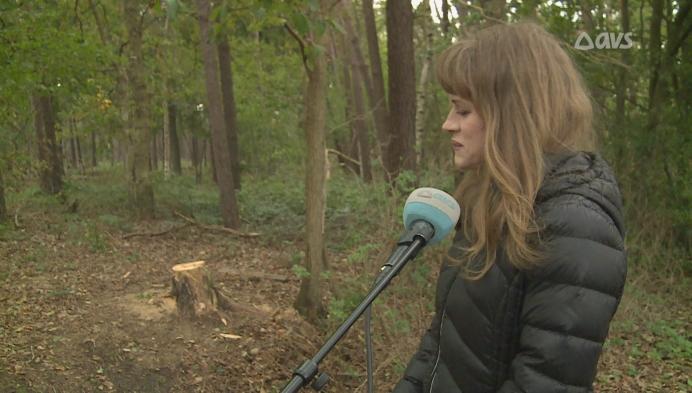 Houtsculptuur van dode boom gestolen uit Keigatbos